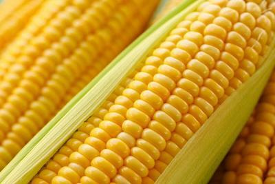 河北省张家口市涿鹿县玉米干粮 杂质很少 水份14%-16%