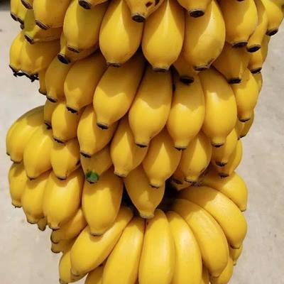 这是一张关于小米蕉 七成熟 的产品图片