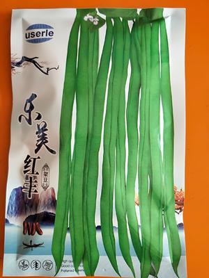 甘肃省张掖市山丹县长青豆角种子  乐美红丰