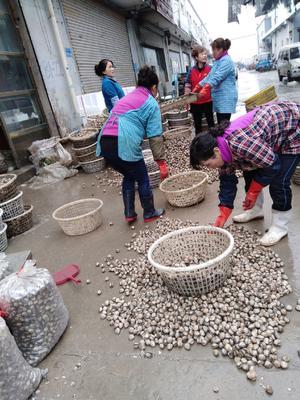 这是一张关于毛蛤 野生 50-80只/公斤 的产品图片