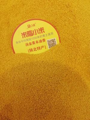 天津南开区米脂小米