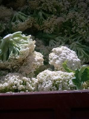 重庆江津区白花菜花 松散 1~2斤