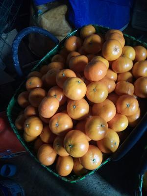 广西壮族自治区来宾市兴宾区茂谷柑 6.5 - 7cm 2 - 3两