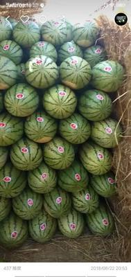 这是一张关于硒砂瓜 10斤打底 8成熟 1茬 有籽 的产品图片
