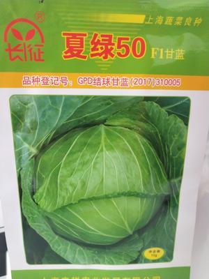 这是一张关于绿甘蓝种子 杂交种 ≥80% 的产品图片