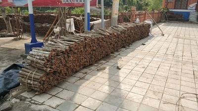 广西壮族自治区百色市那坡县烟仔桂