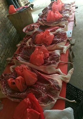 这是一张关于巴马香猪苗 巴马烧猪的产品图片