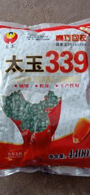 山东省济南市平阴县太玉339玉米种子 常规种 ≥99%