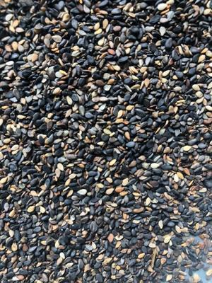 这是一张关于黑芝麻 的产品图片