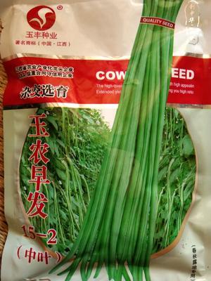 海南省海南省乐东黎族自治县长青豆角种子 ≥98%