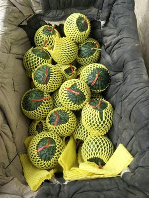 这是一张关于富硒西瓜 1斤打底 9成熟 1茬 有籽 的产品图片