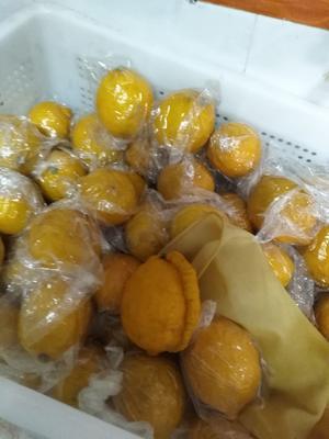 四川省达州市达川区黄柠檬 2 - 2.6两