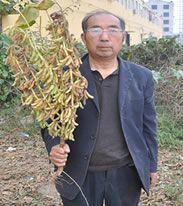河南省商丘市永城市黄豆种子 原种 ≥99.9% ≥95% ≤10%