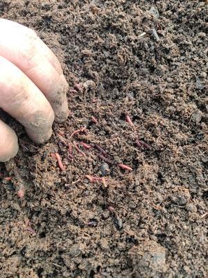 这是一张关于蚯蚓粪 的产品图片