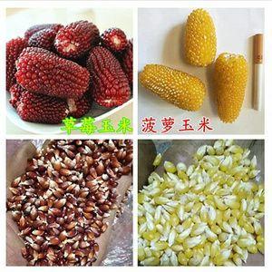 山东省临沂市郯城县水果玉米种子 常规种 ≥95%