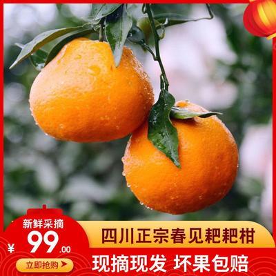 四川省乐山市五通桥区耙耙柑 6 - 6.5cm 4两以上