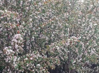 黑龙江省哈尔滨市呼兰区砖石海棠