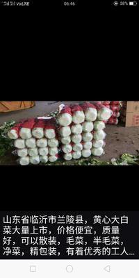 山东省临沂市兰陵县黄心大白菜 3~6斤 毛菜