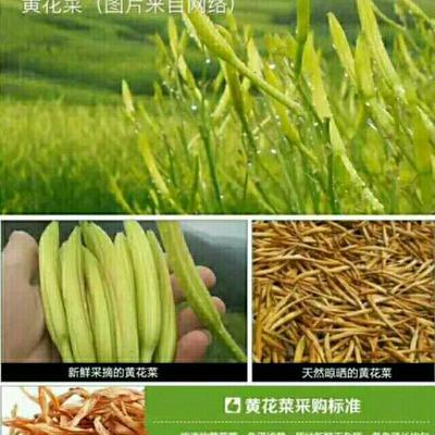 陕西省渭南市大荔县干黄花菜 18-24个月