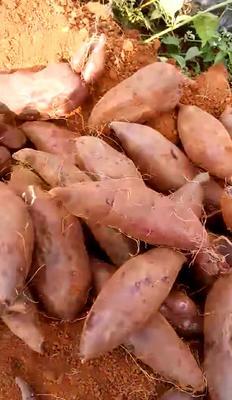 云南省红河哈尼族彝族自治州建水县紫罗兰紫薯 3两~6两