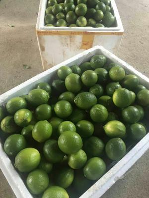广西壮族自治区北海市合浦县青柠檬 2 - 2.6两