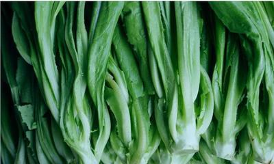 广东省中山市青油麦 10~15cm