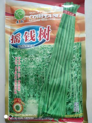 江苏省宿迁市沭阳县白皮豆角种子 ≥90%