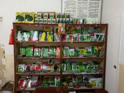 甘肃省陇南市徽县太玉339玉米种子 常规种 ≥97%
