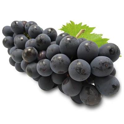云南省红河哈尼族彝族自治州蒙自市夏黑葡萄 0.4-0.6斤 10%以下 1次果