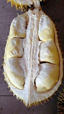 这是一张关于泰国金枕榴莲  2 - 3公斤 90%以上 一级泰国金枕4-5斤的产品图片