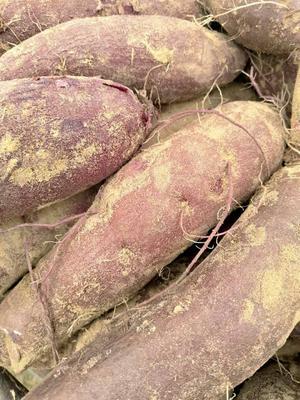 这是一张关于紫罗兰紫薯 1.5两 的产品图片