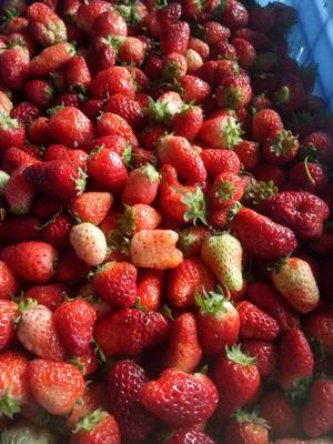 安徽省阜阳市太和县天仙醉草莓 20克以下