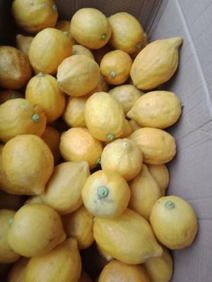 广西壮族自治区贵港市平南县黄柠檬 3.3 - 4.5两
