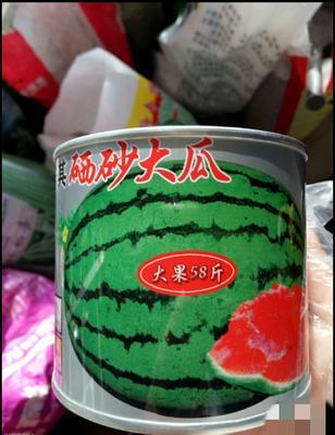 江苏省宿迁市沭阳县硒砂瓜西瓜种子  二倍体杂交种 ≥85% 抗重茬100克/罐