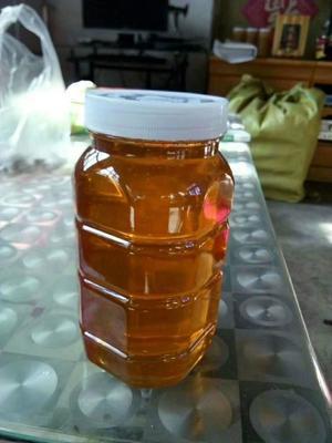 山东省济南市章丘市土蜂蜜  塑料瓶装 2年以上 100% 来自大山里的纯天然蜂