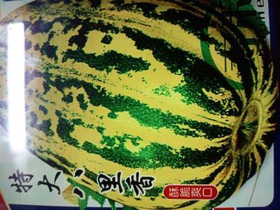 这是一张关于麻皮八月瓜 60g以下 种植 的产品图片