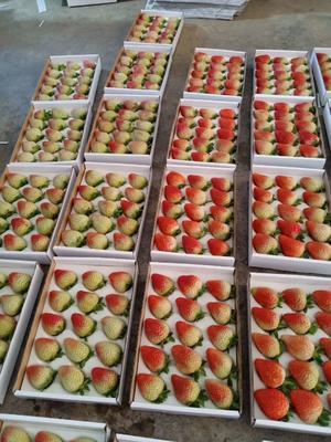 云南省曲靖市会泽县蒙特瑞草莓 20克以上 300多克一盒,20多斤一件