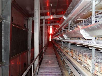 这是一张关于鸡笼 的产品图片