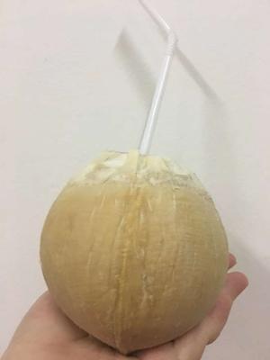 广东省深圳市龙岗区椰皇 1 - 1.5斤