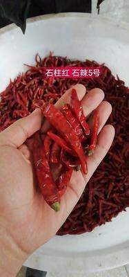 重庆石柱土家族自治县石柱红 5~10cm 中辣 红色