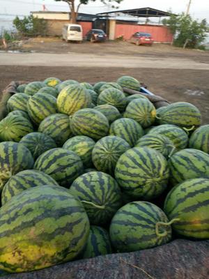 山东省潍坊市青州市甜王西瓜 8斤打底 8成熟 1茬 有籽