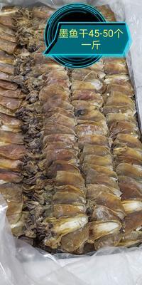 广西壮族自治区南宁市江南区墨鱼干  淡干墨鱼45-50个一斤