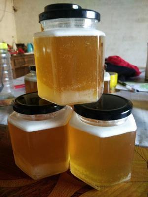 江西省吉安市井冈山市土蜂蜜 塑料瓶装 2年以上 100%