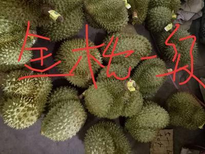 江西省赣州市兴国县金枕头榴莲 3 - 4公斤 80 - 90%以上