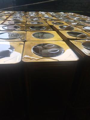 这是一张关于清水笋罐头  24个月以上 纯天然绿色食品,吃的放心!!!的产品图片