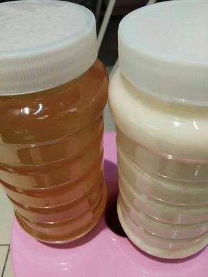辽宁省葫芦岛市建昌县土蜂蜜 塑料瓶装 2年以上 100%