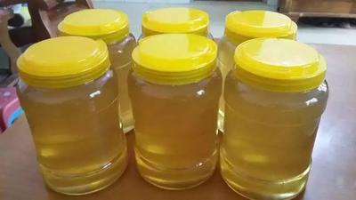 广东省茂名市高州市土蜂蜜 塑料瓶装 1年 100%