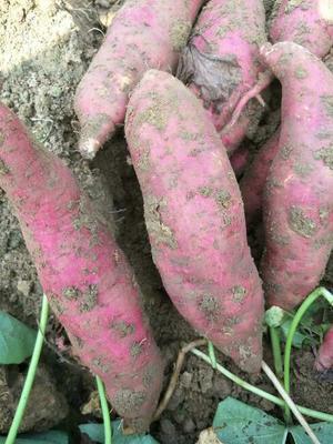 这是一张关于西瓜红红薯 6两~1斤 红皮 的产品图片