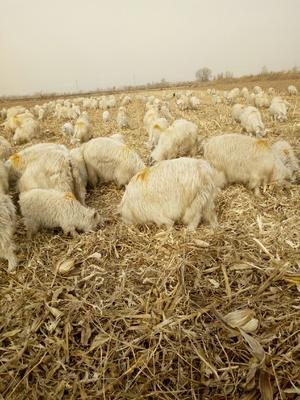 山西省忻州市忻府区羊绒