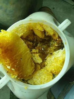 云南省红河哈尼族彝族自治州绿春县野生蜂蜜 塑料瓶装 2年以上 98%